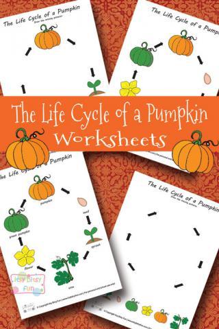 Free Life Cycle Of A Pumpkin Worksheets Homeschool Freebies